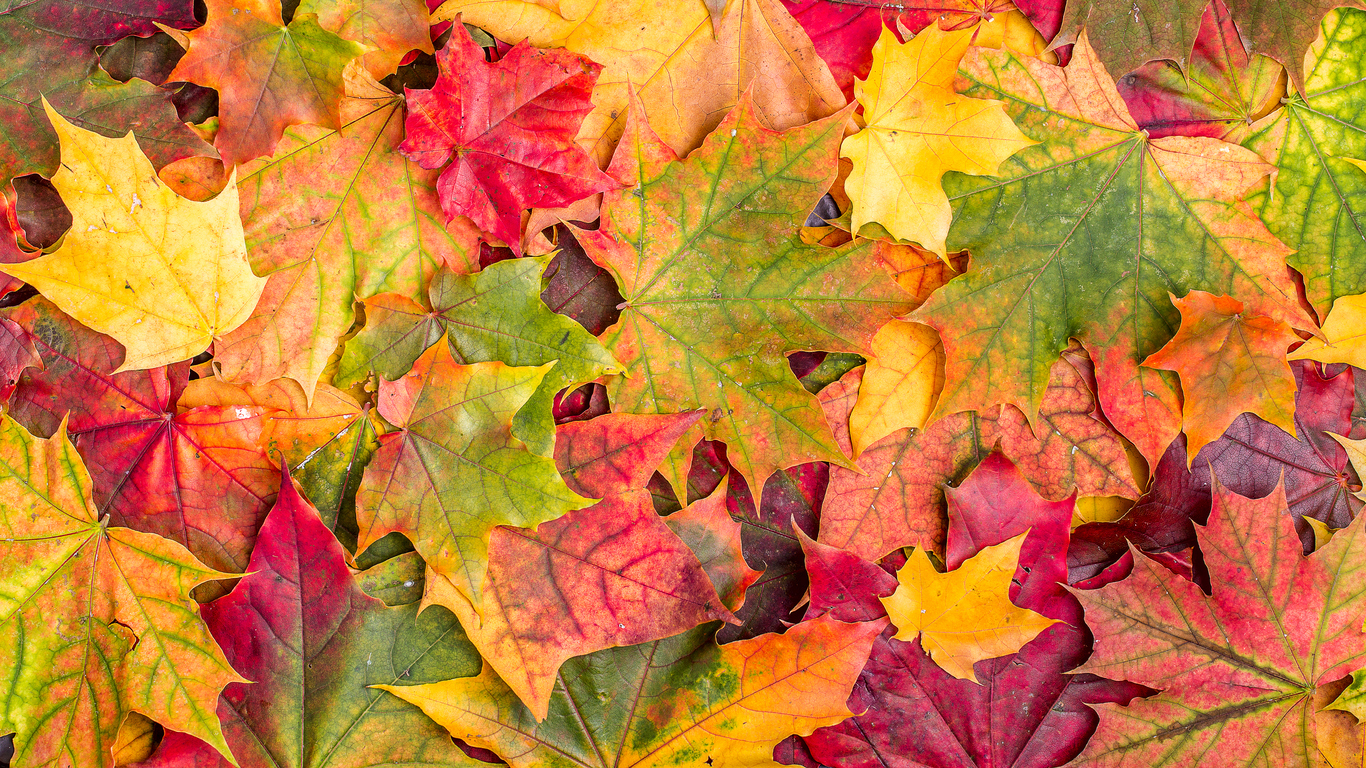 Falls Prevention Day, Fall Equinox